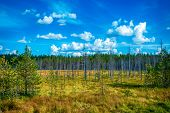 Autumn forest in a sunny day in Karelia Russia