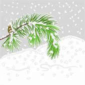 Pine Branch With Snow Christmas Theme Vector