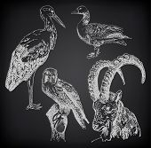 digital drawing of stork, falcon, goose  and  goat
