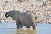 Elephant In The Water, Etosha National Park, Namibia