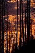 Sunset Through Burned Trees