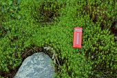 stock photo of phone-booth  - Red phone booth in the green moss - JPG