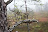 image of cobweb  - The spider web  - JPG