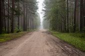 Misty Country Road In The Early Morning