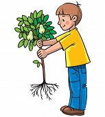Boy the gardener with a tree