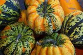 Green And Orange Autumn Pumpkins