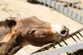 stock photo of headstrong  - donkey wants to eat in the zoo - JPG