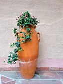 Clay Amphora With Green Flowering Ivy