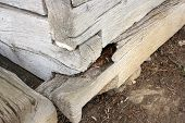 Wooden Ground Sill Showing Old Fungus Attack