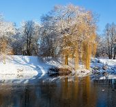 Winter Landscape With The Trees Which Are Reflected In Water