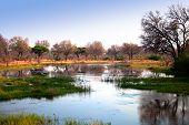 African Delta