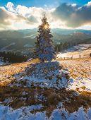 Majestic Winter Landscape Glowing By Sunlight.