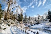 picture of frozen  - A beautiful frozen park landscape on a sunny day with a stream running under a bridge in the background and fallen frozen branches blocking a pathway under a large frozen willow tree.