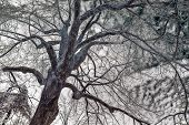 stock photo of inverted  - A background color inverted image of a mans face in the bark of an ice covered tree after an ice storm during the winter season - JPG