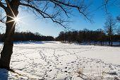 Beautiful and sunny Swedish winter landscape