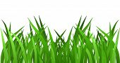 picture of lawn grass  - Grass isolated on white - JPG
