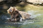 Young Bears Wrestling