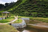 Arbor And Riverside At Tea Plantation - Green Hills Covered With Tea Bushes