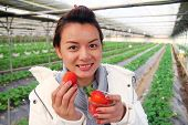 image of overcoats  - Asian beautiful tourist woman wearing overcoat in strawberry greenhouse harvest fresh red - JPG