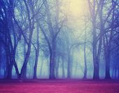 a foggy forest during fall toned with a retro vintage instagram