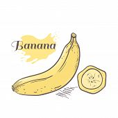 Vector Illustration Of Hand Drawn Banana