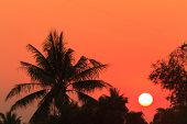 Sunset over coconut and bamboo tree