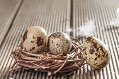 Quail eggs on wooden background closeup.