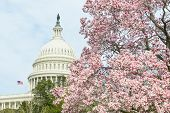 United States Capitol Building in Spring - Washington DC