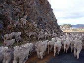 Finding the Way, Tasmania, Australia.