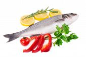 Composition of fresh seabass