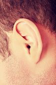 Human man ear on white background