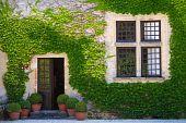 Ivy Clad Wall