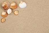 pic of shells  - Beach scene in summer holiday with sand sea shells on vacation and copyspace - JPG