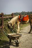 stock photo of wheelbarrow  - yellow maned horse grazing in farm and wheelbarrow full of sand - JPG