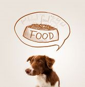 stock photo of border collie  - Cute brown and white border collie thinking about a bowl of food in a thought bubble above his head - JPG