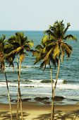 Постер, плакат: Тропический пляж в Вагатор Индия