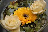 Gebra & Roses In A Bowl