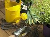 Watering Can And Trowel Next To Plants
