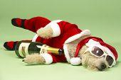 Samll cão em traje de Santa deitado
