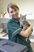 foto of vets surgery  - Vet Holding Cat In Surgery - JPG