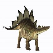 image of behemoth  - The Stegosaurus dinosaur is known for its distinctive tail spikes and plates along its spine to defend itself - JPG