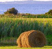 Mown Hay