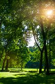 Summer Landscape - Summer City Park With Deciduous Green Summer Park Trees In Sunny Summer Day. Summ poster
