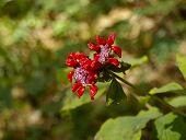 Wood unusual red medical flower