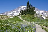 Mount Rainier's Summer Meadows
