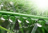 stock photo of spider web  - Fresh grass with dew drops close up - JPG