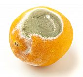 damaged orange isolated on a white background