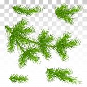 A Large Set Of Different Green Pine Branches. Isolated. Christmas. Decor. Green Lush Spruce Or Pine  poster