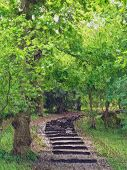 Beautiful Painting Of A Path Of Steps In The Woods With Green Trees And Space For Text. poster