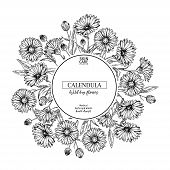 Hand Drawn Wild Hay Flowers. Calendula Flower. Medical Herb. Vintage Engraved Art. Round Composition poster